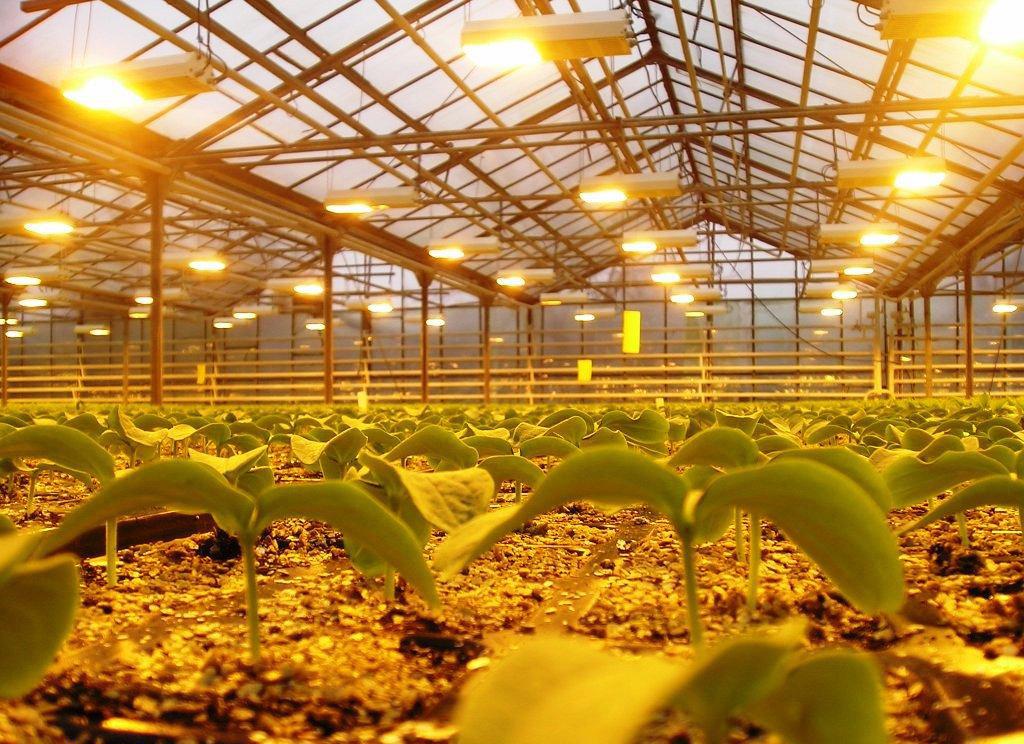 Лампы ДНаТ на страже тепличного хозяйства