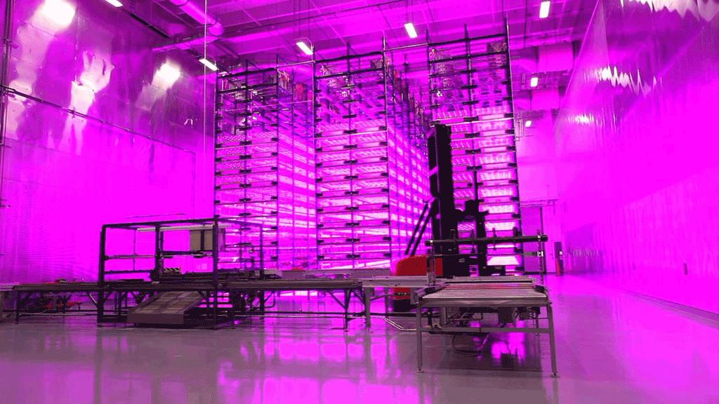 Экспериментальные фермы по досвечиванию рассады светодиодами