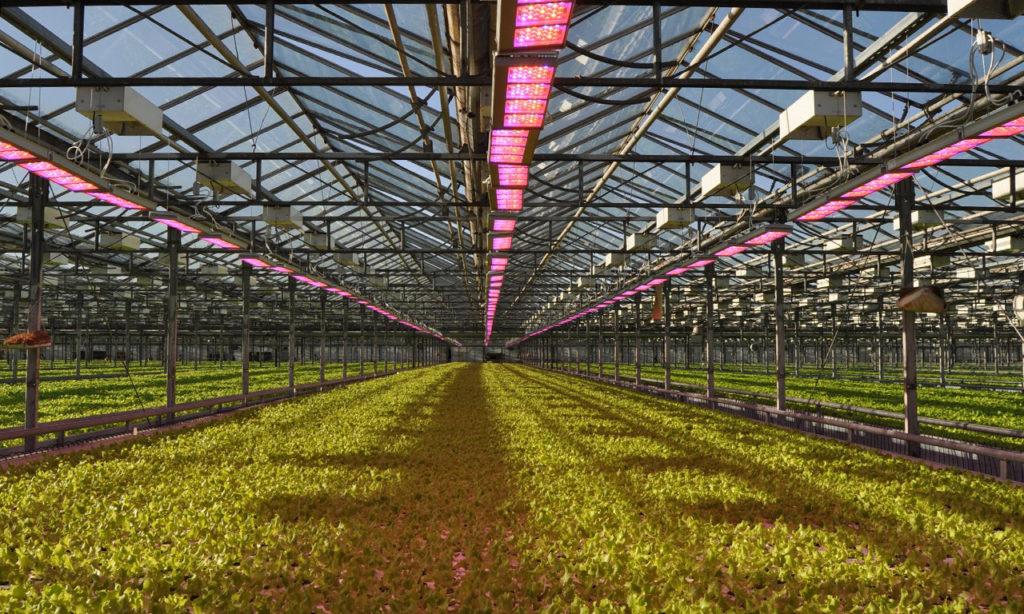 Светодиодное освещение для растений, представленное нашими светильниками серии AtomSvet® BIO, было разработано несколько лет назад ведущими инженерами компании- производителя «АтомСвет» совместно с крупнейшими научными учреждениями Российской Федерации, работающими в этой области ботанических исследований