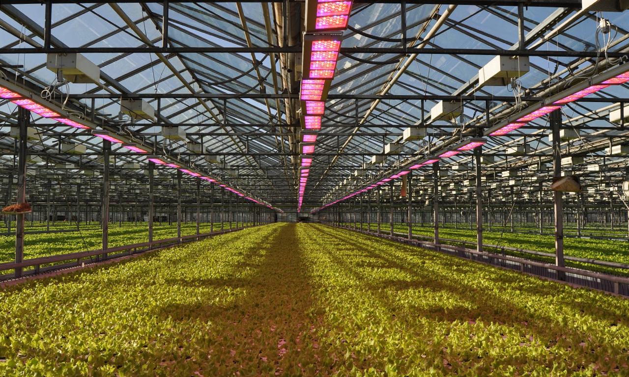 af2c8bdb Светодиодное освещение для растений, представленное нашими светильниками  серии AtomSvet® BIO, было разработано несколько