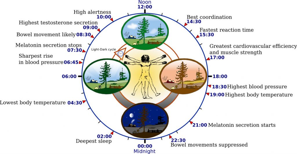 Биологические часы и HCL