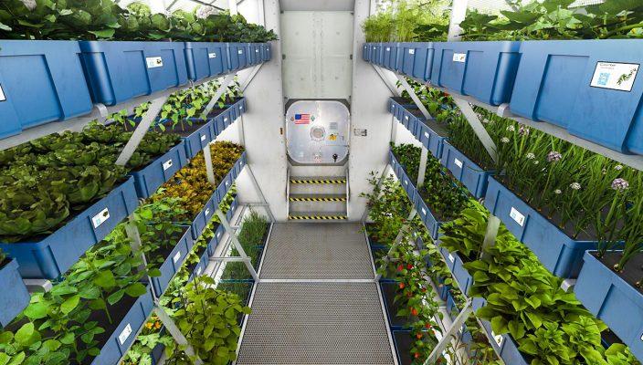 Osram участвует в исследовании NASA по выращиванию растений в космосе
