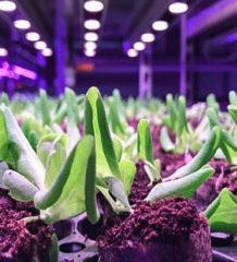 Signify помогла создать благоприятные условия для выращивания орхидей и латука на Тайване