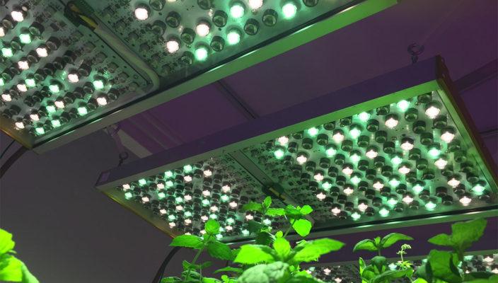Phytofy RL позволяет исследователям проводить оценку самых разных световых рецептов без необходимости менять облучатели между тестами.