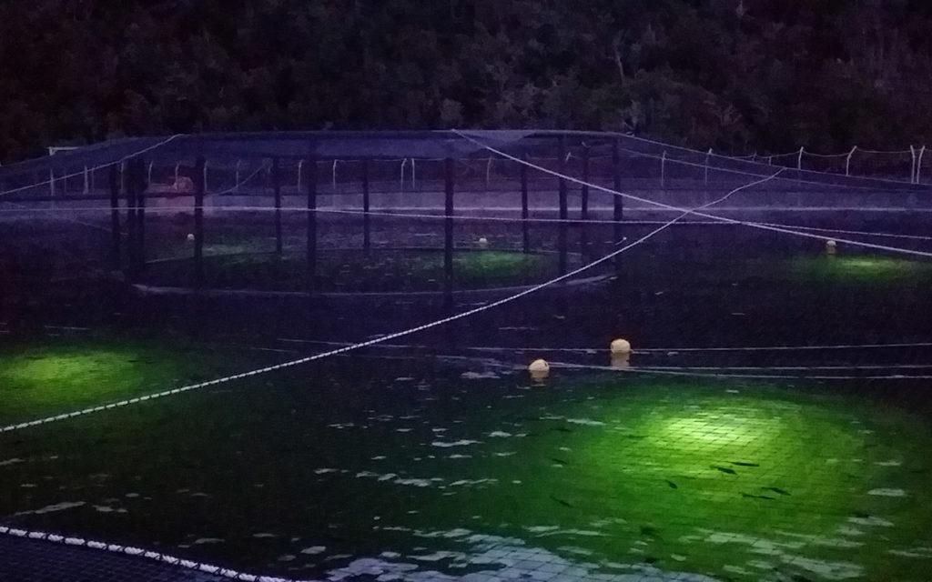Специализированное освещение для подводных ферм
